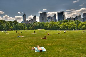 sheep meadow jul