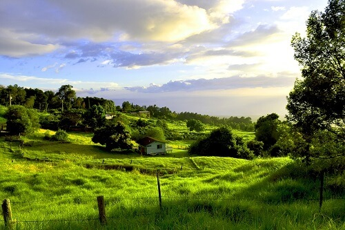 Maui Green Nature Countryside Kula Hawaii