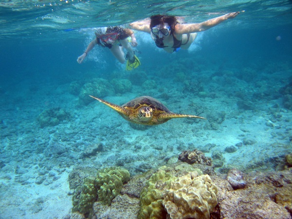 Snorkelers with sea turtle
