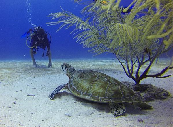 diving oahu