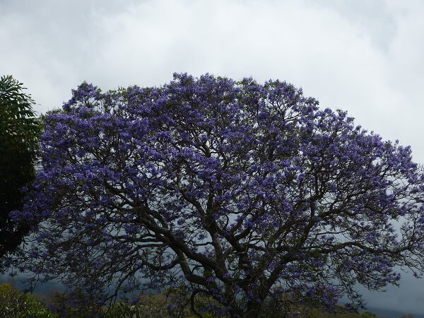 Maui Spring