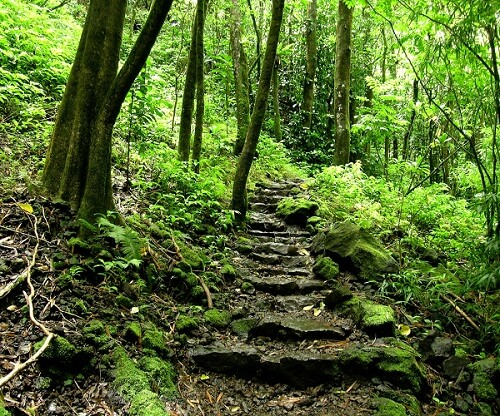 Waimoku Falls trail