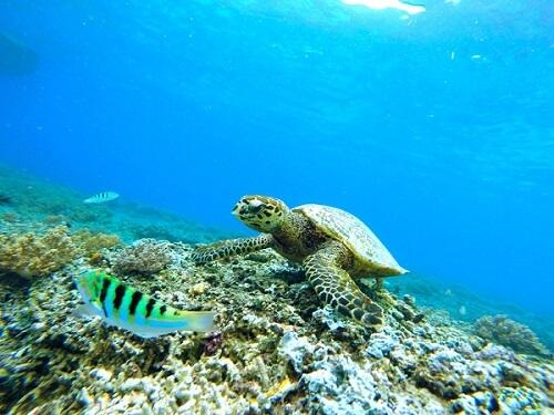 underwater Maui
