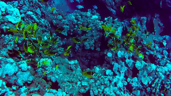 Fish Rock Lanai Maui