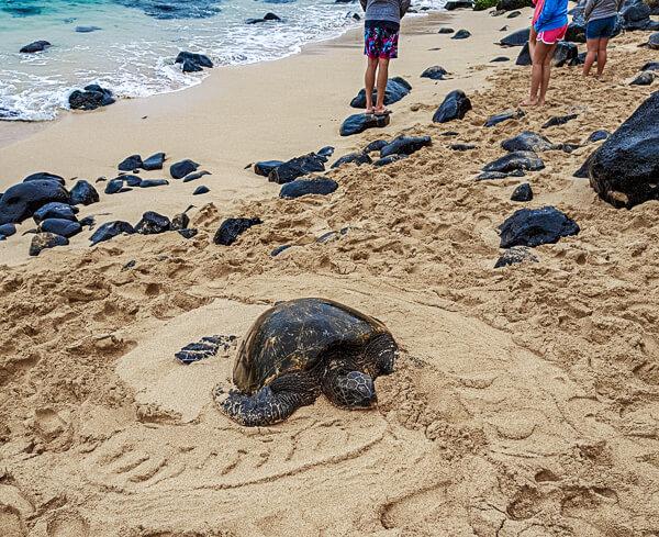 Turtle Hookipa Beach