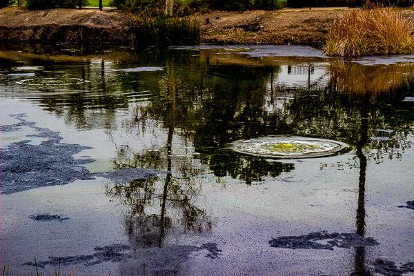 La Brea Lake Pit