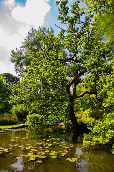 Longstock water gardens tree