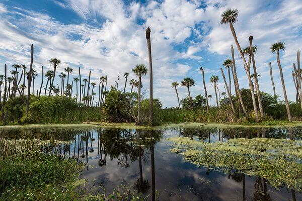 Swampland Orlando