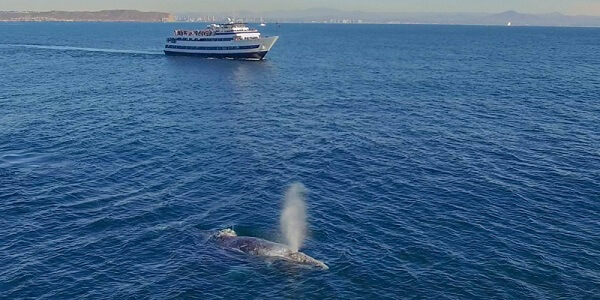 Whale Watching Horn Blower Cruises
