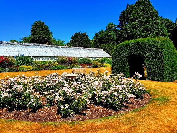 Highclere rose Garden