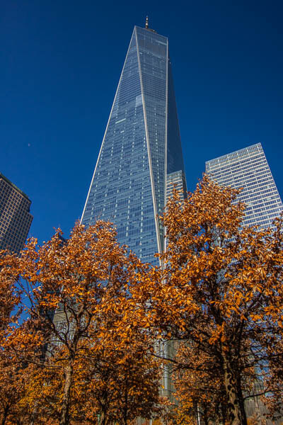 Freedom tower with trees