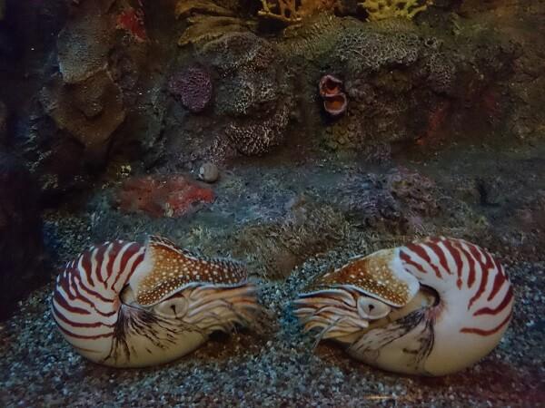 Monterey Bay Aquarium Nautilus