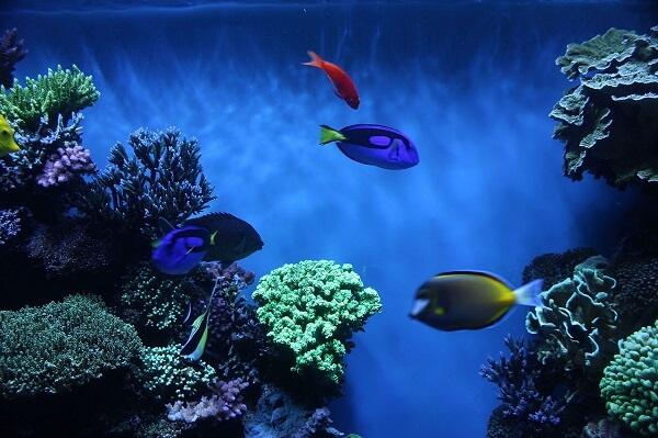 Monterey Bay Aquarium Review