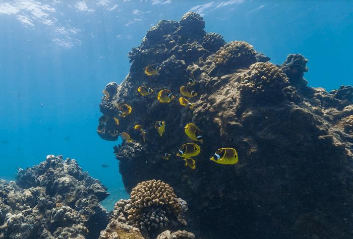 Hanauma Bay Underwater