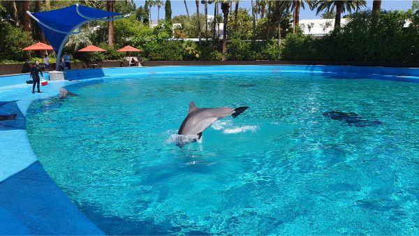 Secret Garden Dolphin jump