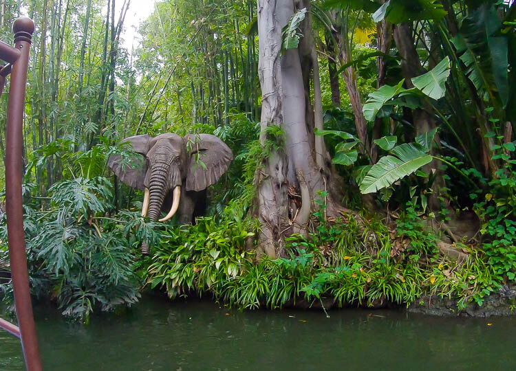 African Bull Elephant on Jungle Cruise