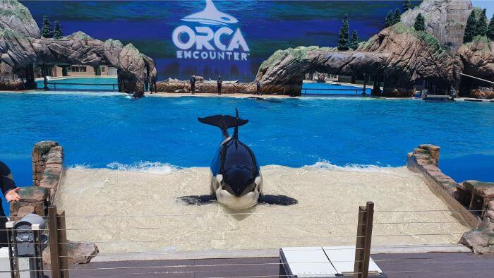 SeaWorld Orca Beaching