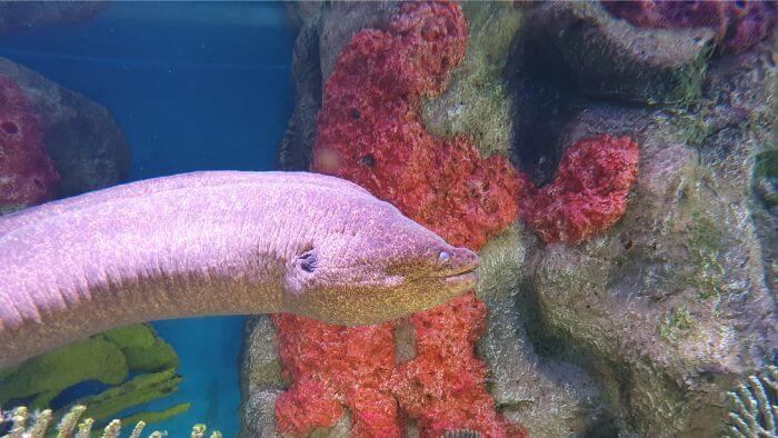 SeaWorld Moray Eel