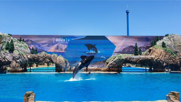 SeaWorld Orca Breach