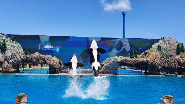 SeaWorld Orca Double breach