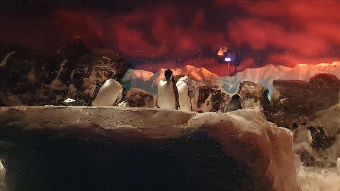 SeaWorld Penguins