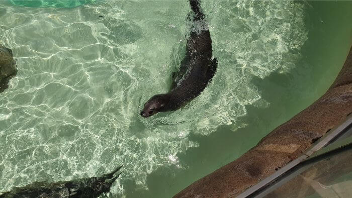 SeaWorld_SeaLion