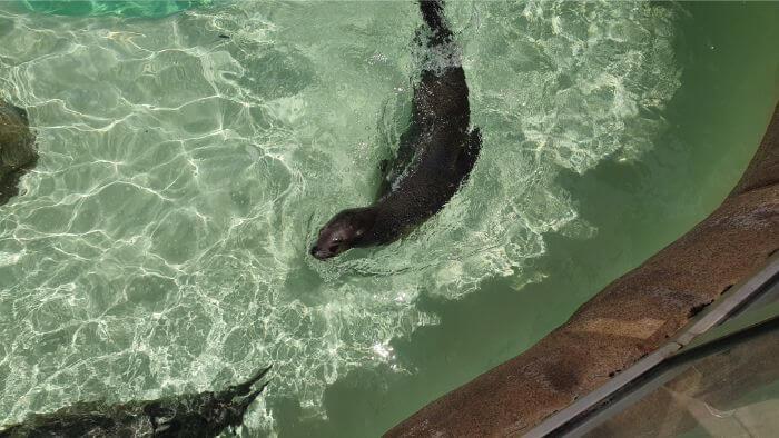 SeaWorld_SeaLion
