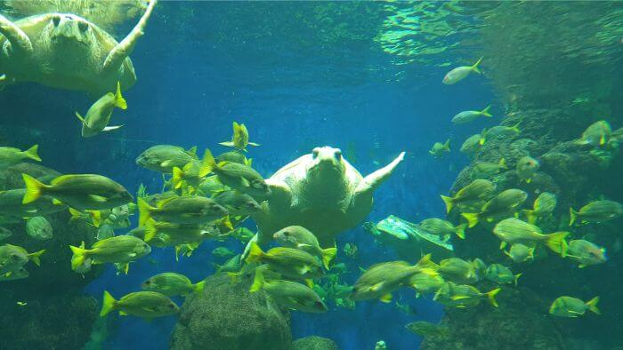 SeaWorld Sea Turtle