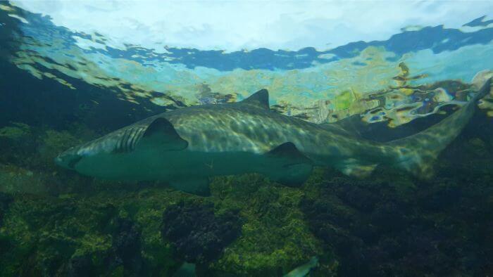 SeaWorld Shark