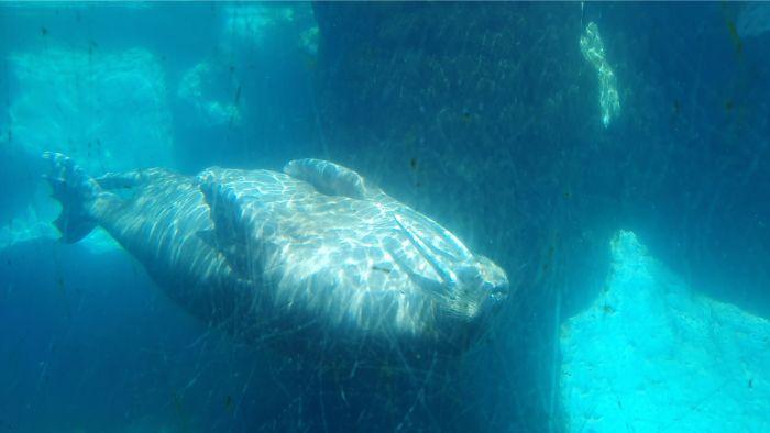 SeaWorld Walrus