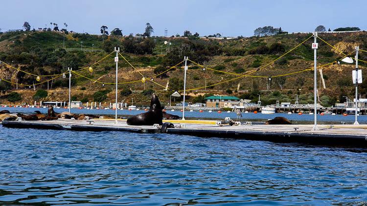 Speedboat San Diego Tour Bait Barge