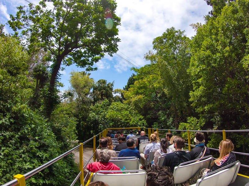 San Diego Zoo Guided bus tour