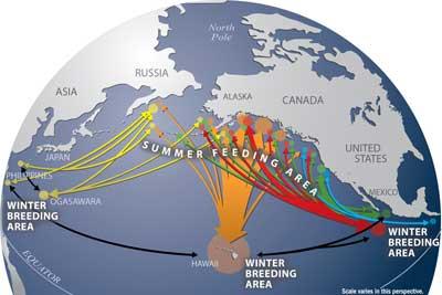 NOAA Whale Migration Data