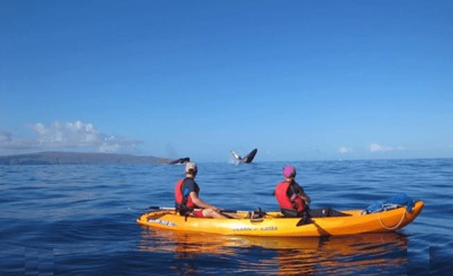 Aloha Kayak Tours