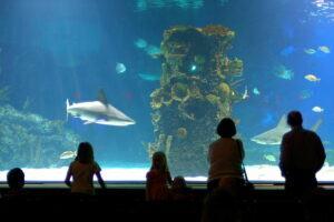 Shark Tank at Newport Aquarium