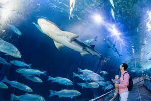 aquarium gallery shark