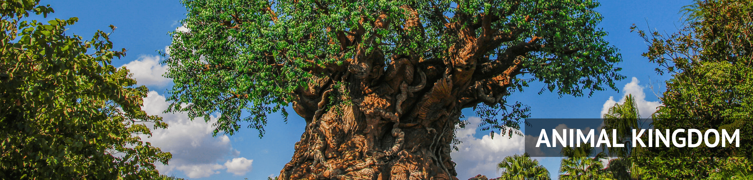 Animal Kingdom Header