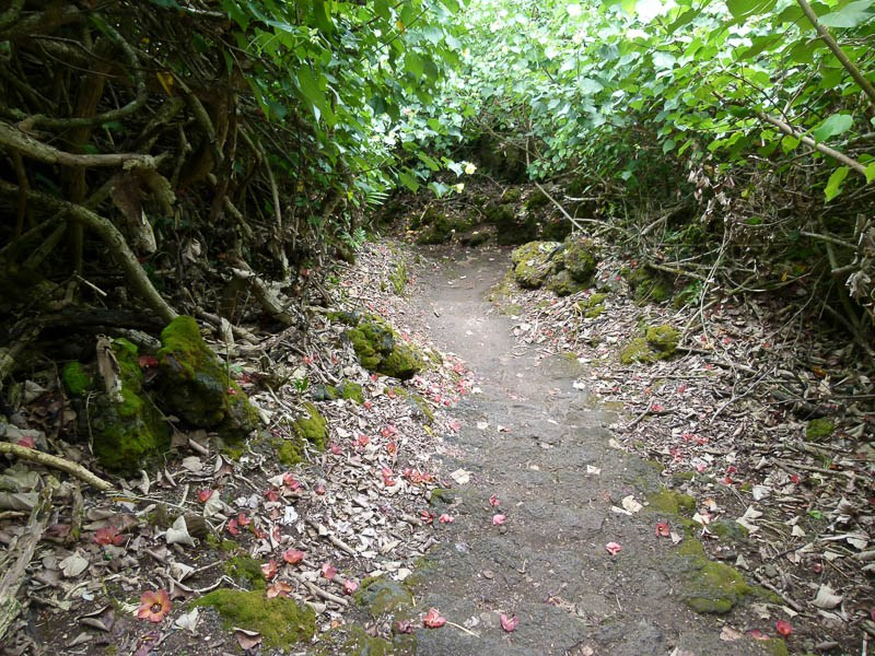 Trail to Princess Cave