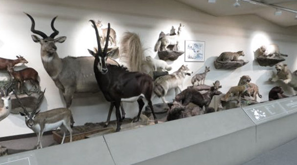 LV Natural History Museum