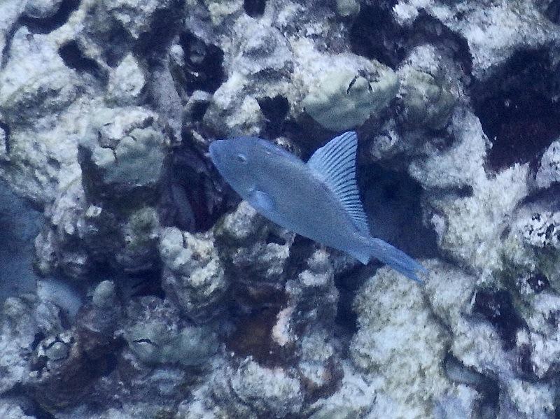Emily Robinson Mystery Fish