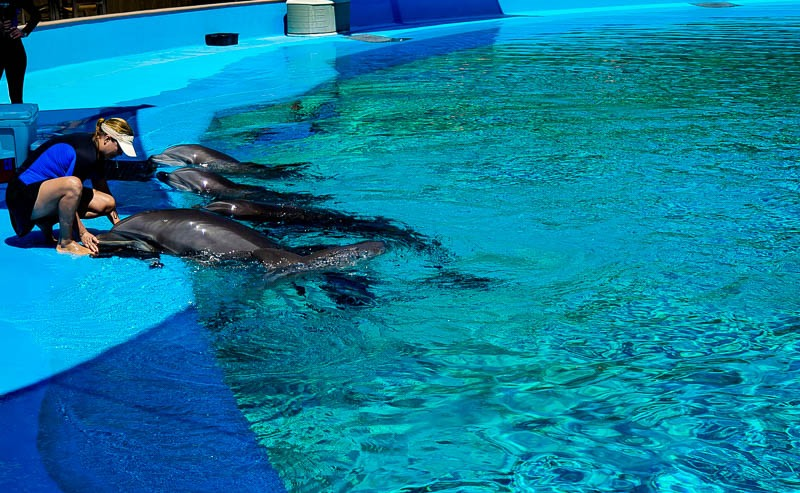 Secret Garden Dolphin Habitat