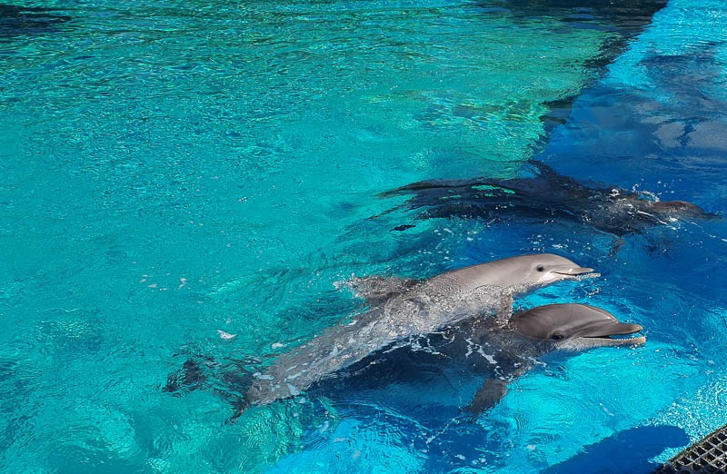 Secret Garden Dolphins