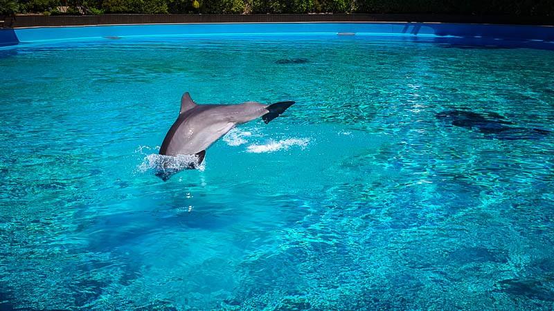 Dolphin Show Secret Garden