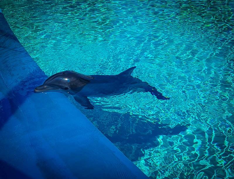 Secret Garden Dolphin