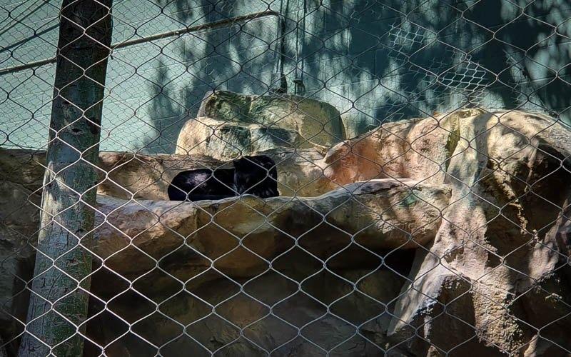 Secret Garden Panther