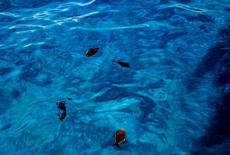 Molokini Snorkeling Fish bowl