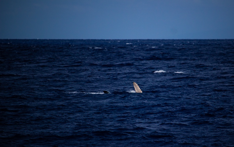 Molokini Snorkeling Humpback Whales
