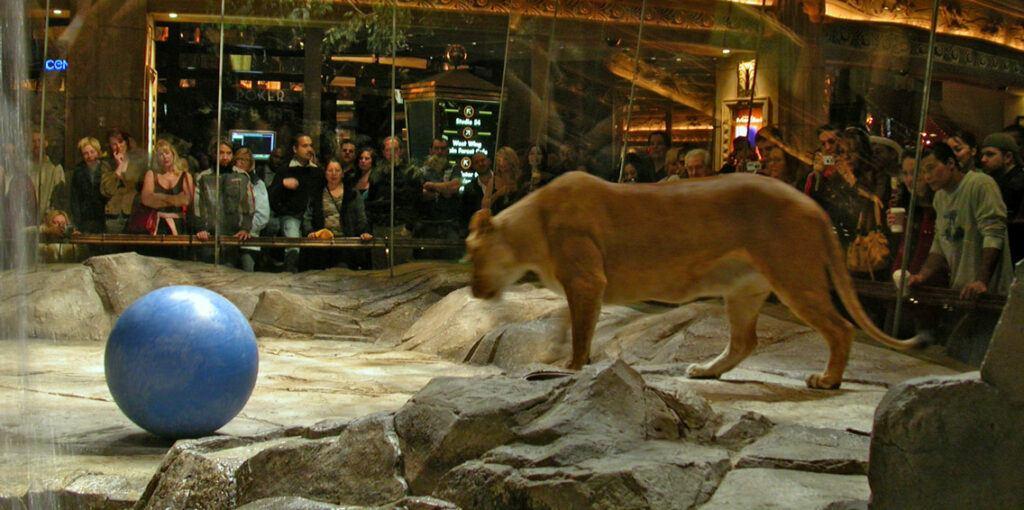 Mgm grand tiger exhibit